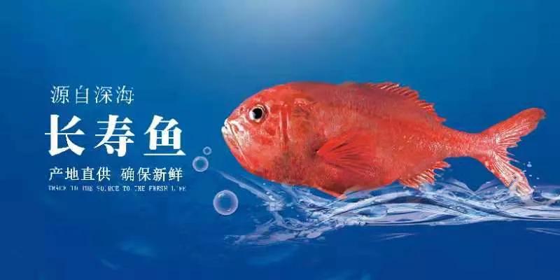 青岛佳之杰水产品有限公司——泽自然之恩惠,享大海之精华(图4)